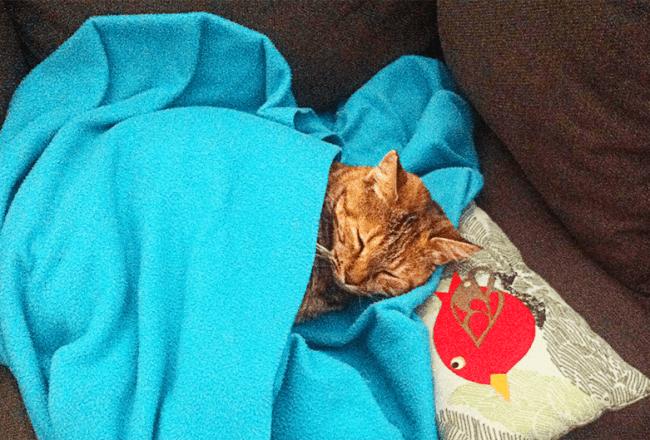 historia de una gata
